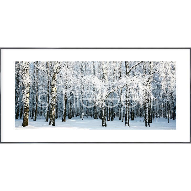 """Gerahmtes Bild """"Birch Forest Snow"""" mit Alurahmen Alpha"""