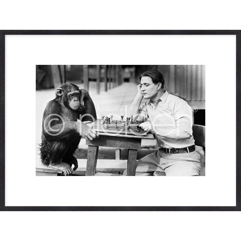 "Gerahmtes Bild ""Monkey chess"" mit Holzrahmen Quadrum"