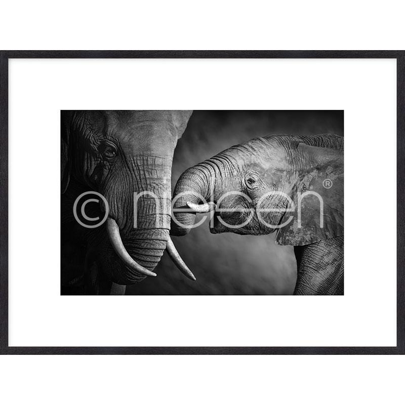 "Gerahmtes Bild ""Elephant Baby"" mit Holzrahmen Quadrum"